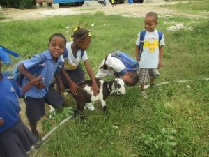 Students tending to a goat from our animal program